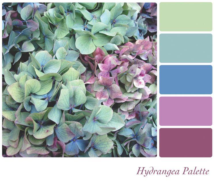 Hydrangea color pallete