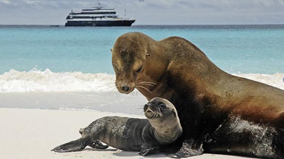 Seals_NationalGeographic_Lindblad_GalapagosIslands