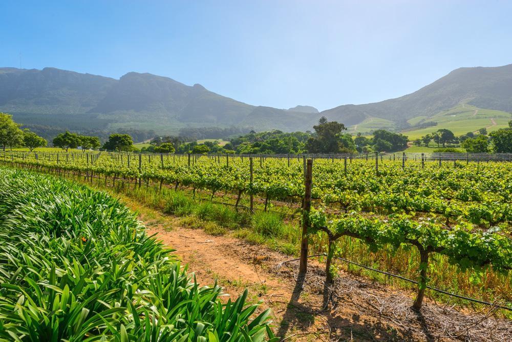 Farmlands of South Africa
