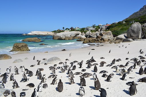 Beaches in Cape Town South Africa