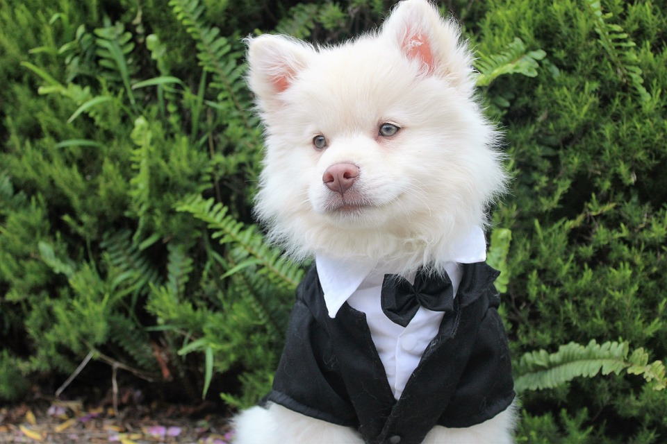 Do you want Fido as part of our wedding?