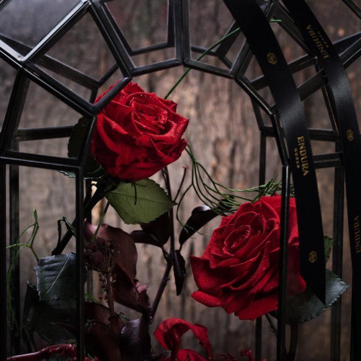 Timeless red roses