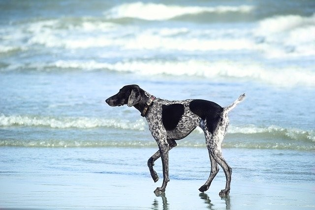 Find the right location for a dog-friendly honeymoon