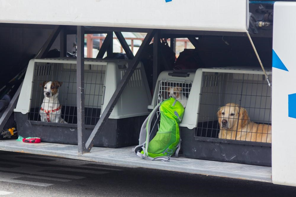Crate your pup during travel