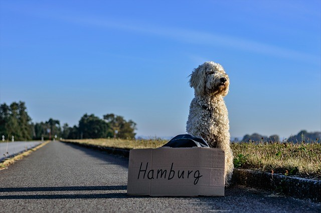 Is your hotel dog-friendly?