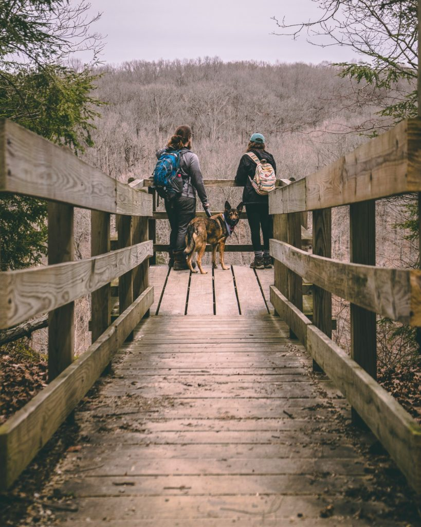 Dog-friendly honeymoon site Photo by Miguel-Dominguez-PI5YBmqcsIk-Unsplash