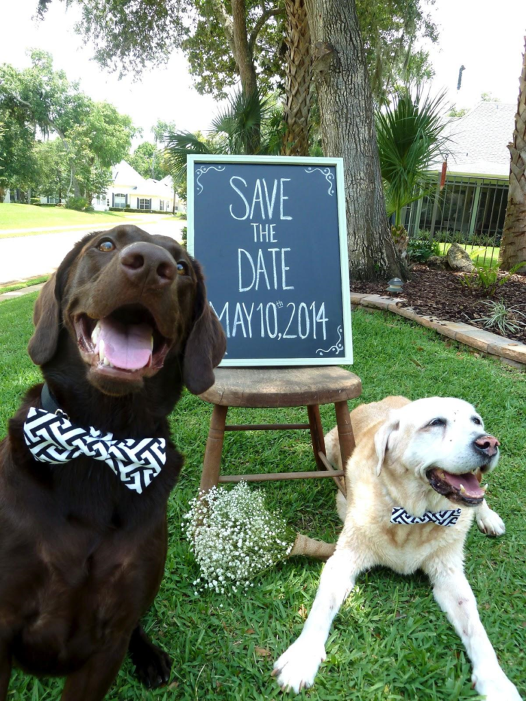 Save the date with your pet