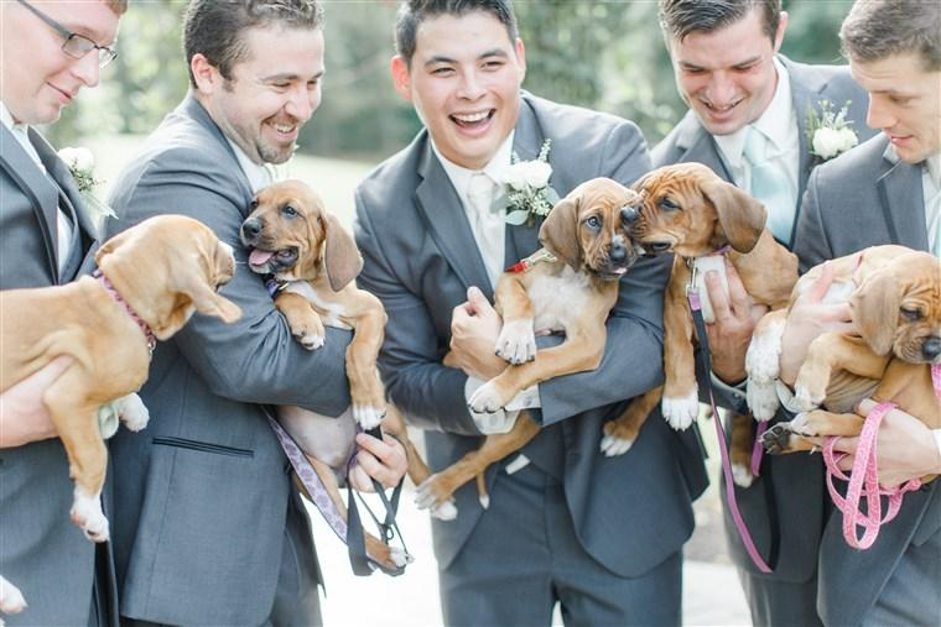 Groom & ushers with dogs
