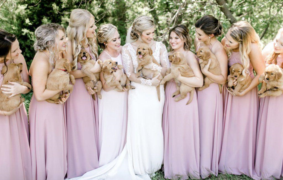 Bride, her dogs ,and her girls