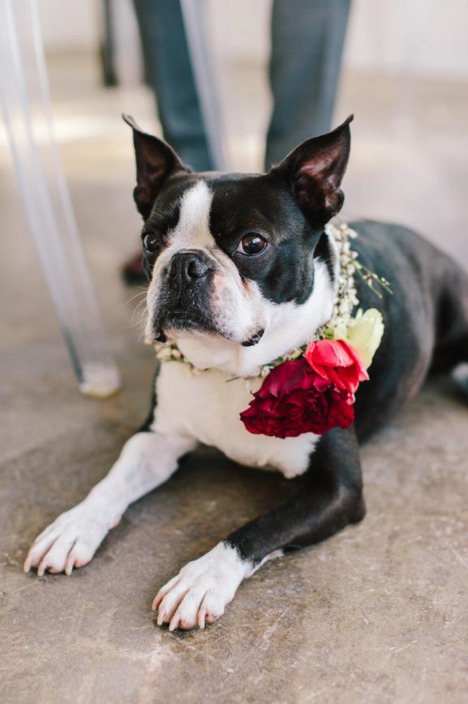 Dress your dog for the big day