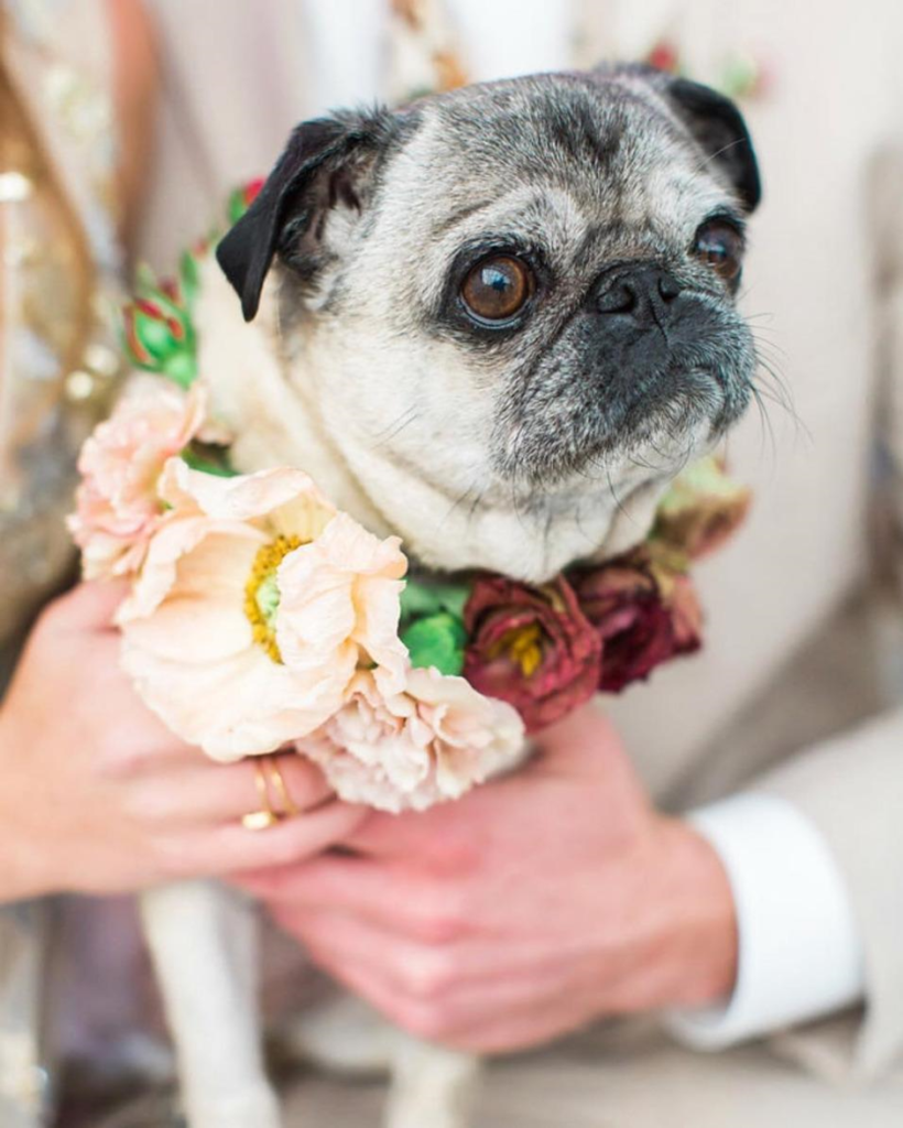 Invovle your dog in the wedding