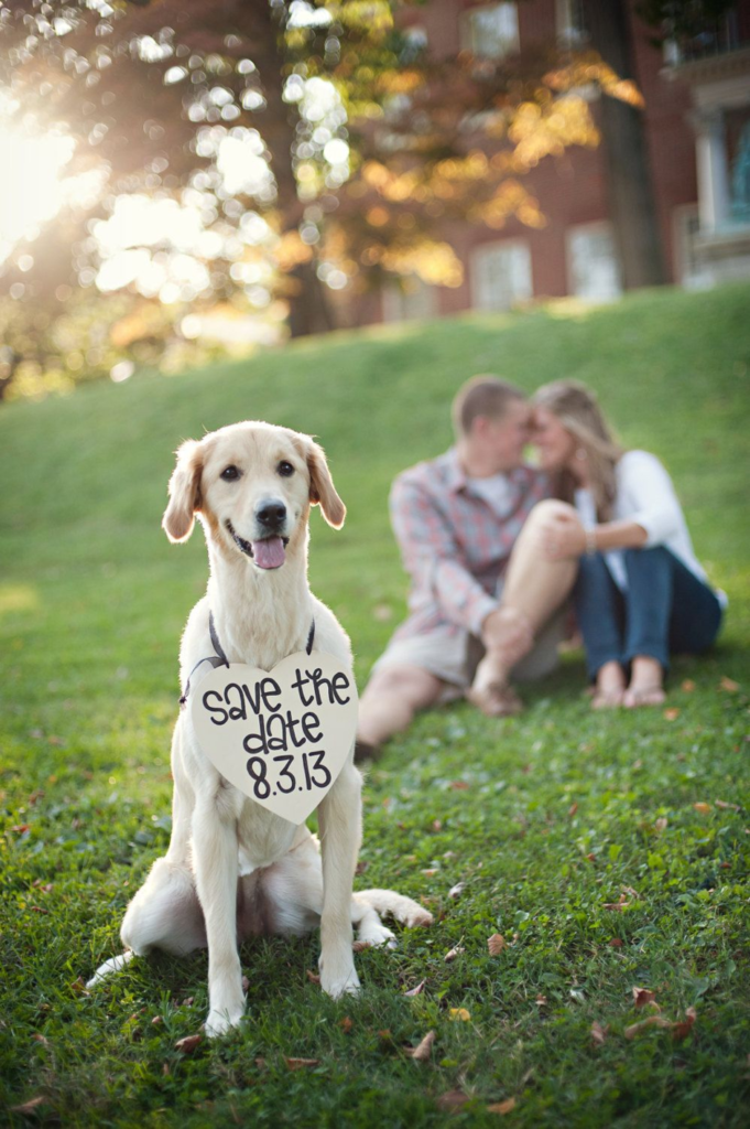 Involve your pet in pre-wedding shots