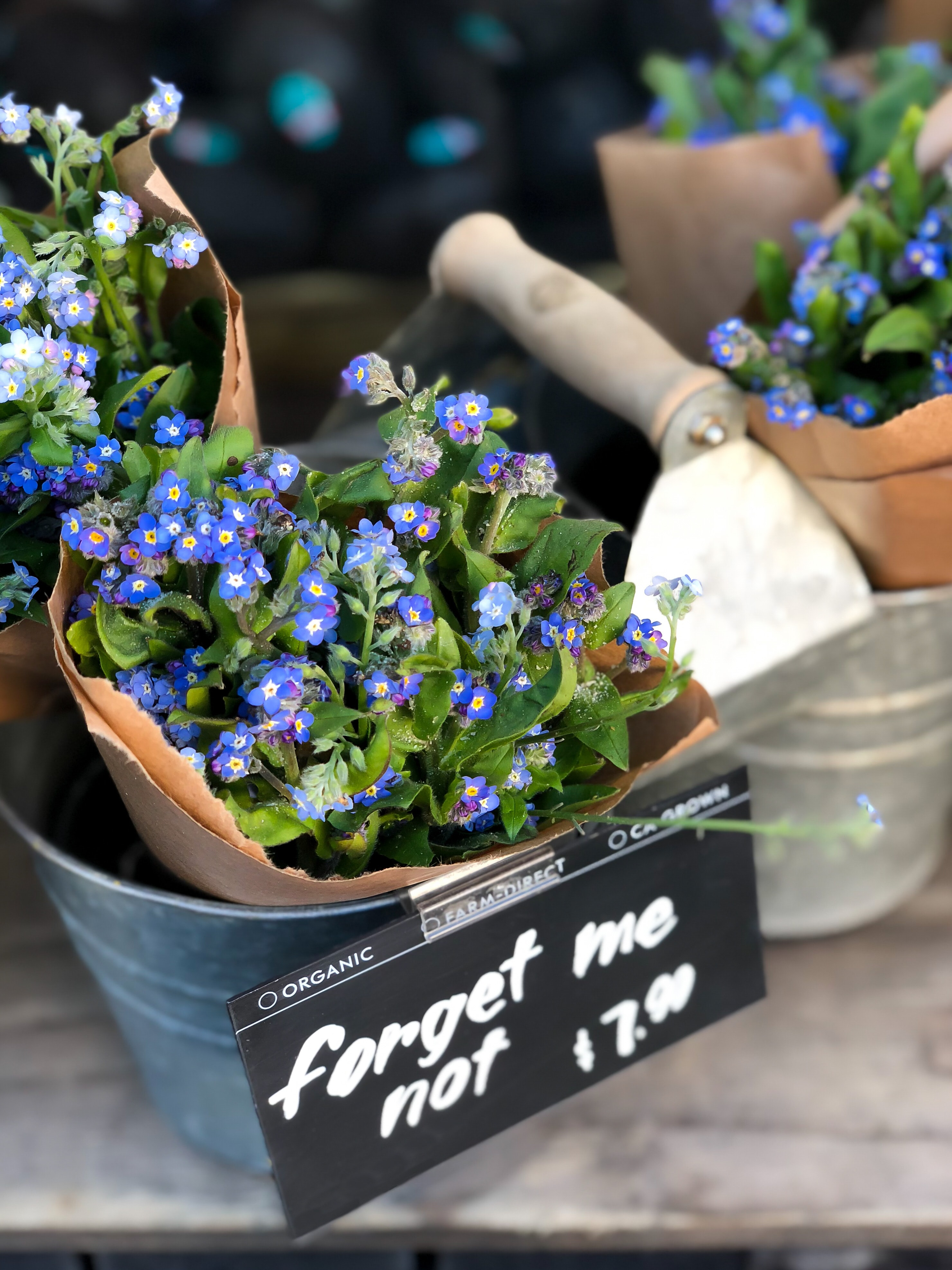Forget-me-nots for fidelity