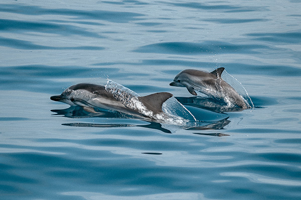 Sunset Dolphin Cruise In The Maldives