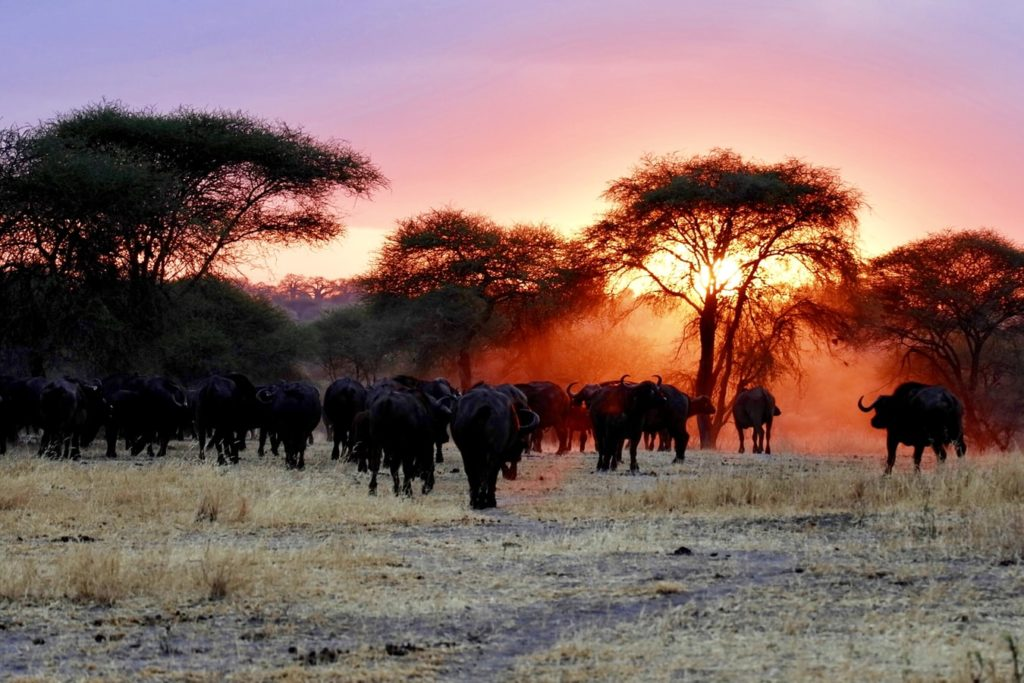 Tarangire National Park, Arusha, Tanzania