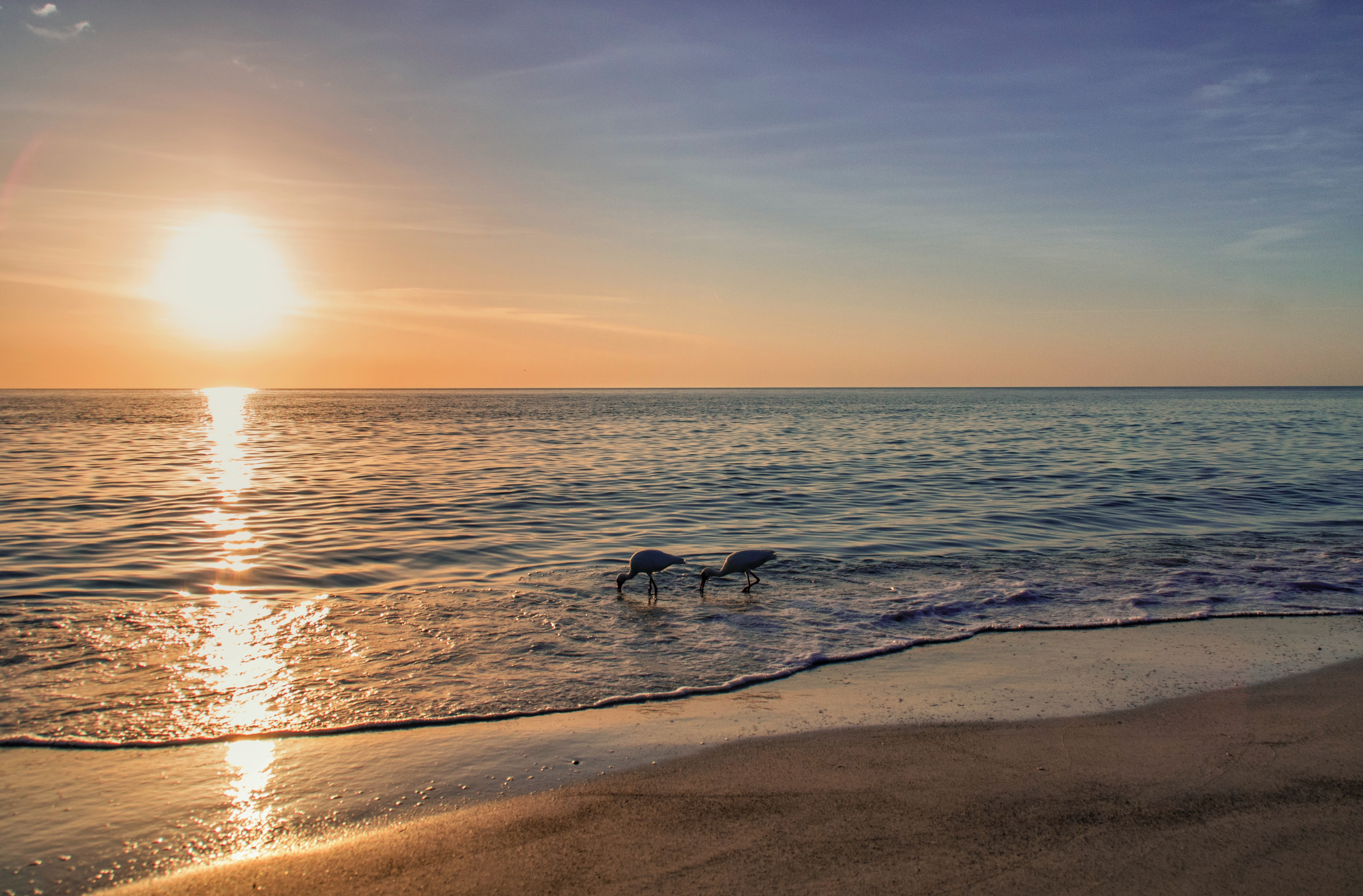 Discover a vibrant and beachy honeymoon in Sarasota, FL