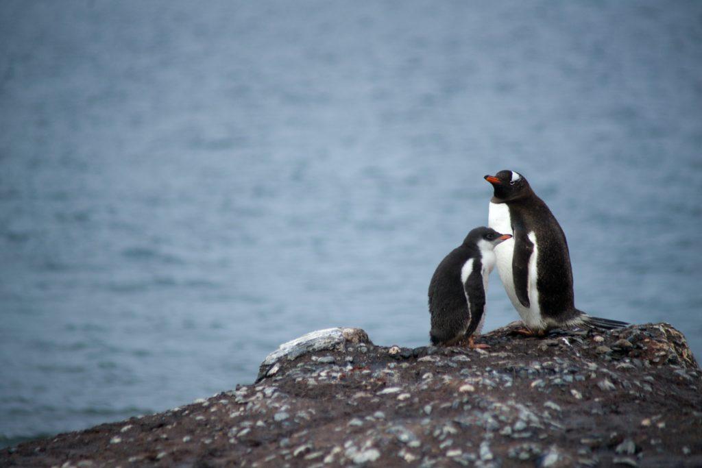Penguins, Antarctica honeymoon travel