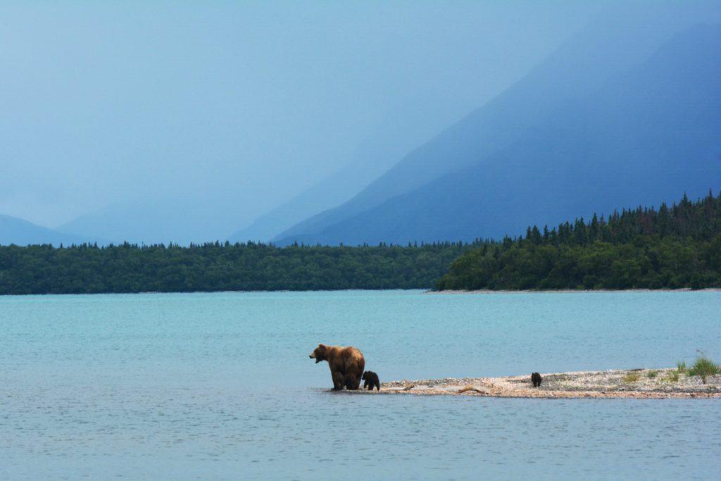 Katmai National Park, King Salmon, Alaska