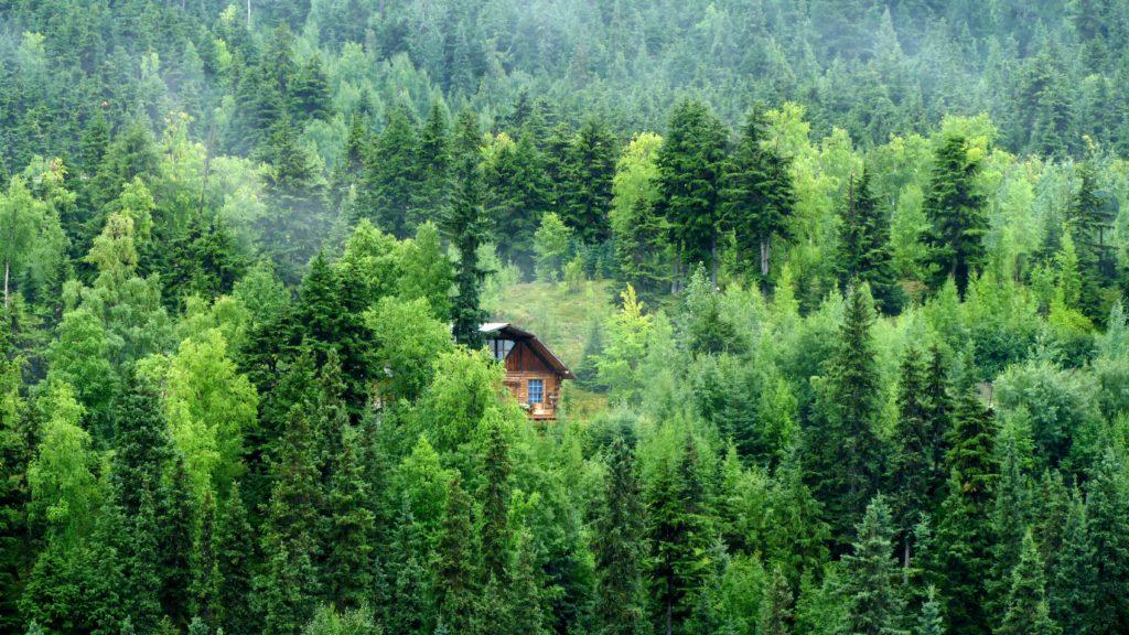 Cabin in the woods, Alaska